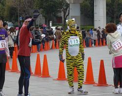 トラ猫.JPG